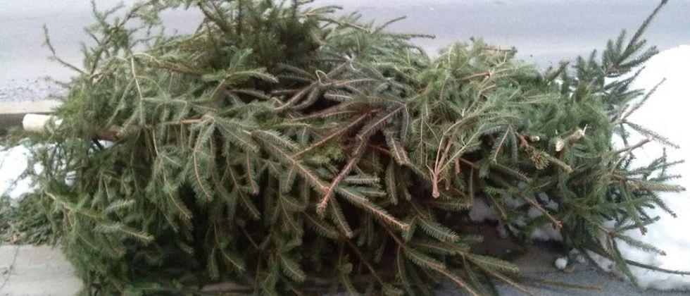 Odvoz božićnih drvaca